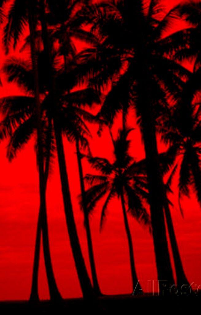 Pretty Red Tree Tree Hd Wallpaper Garden Trees