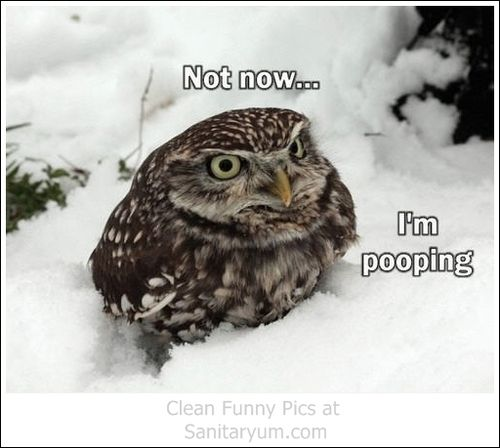 Welcome To Sanitaryum Clean Humor Funny Pics Vids Gifs Funny Bird Pictures Funny Owls Funny Birds