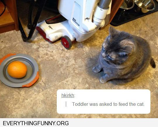 Cute Funny Memes For Him : Funny cat picture toddler told to feed cat gives him full orange