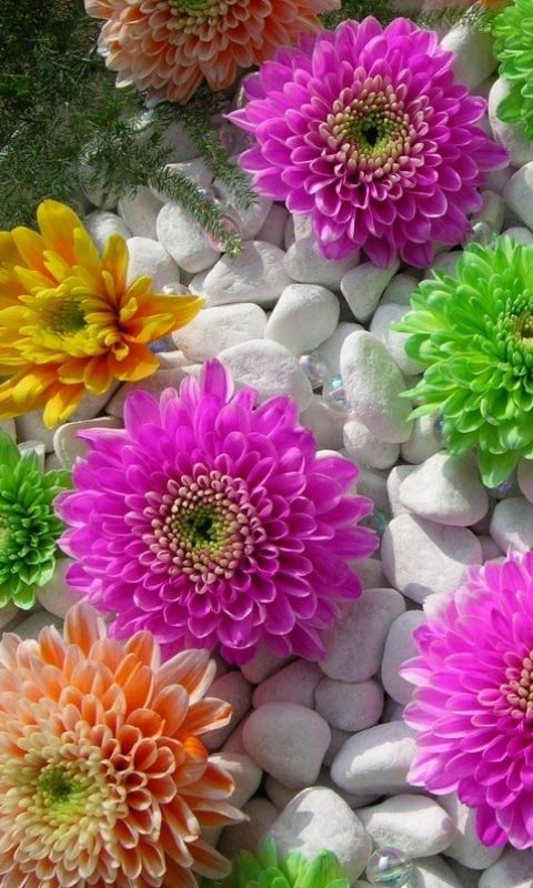 Hd Wallpapers For Mobile Flower Phone Wallpaper Beautiful Flowers Wallpapers Hd Wallpapers For Mobile