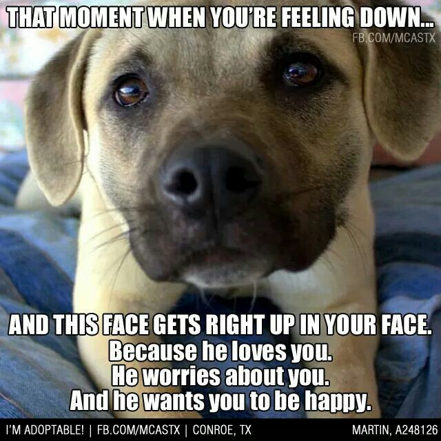 Pin By Ted Shrewsbury On My Pet Stuff I Love Dogs Dogs Pets