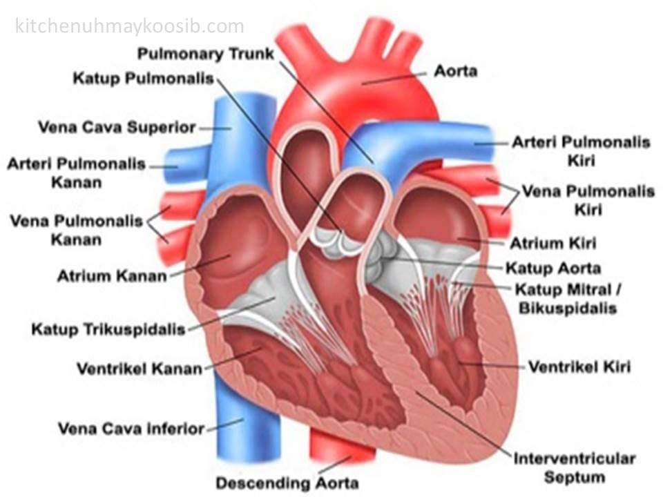 21++ Ciri ciri penyakit jantung ideas in 2021