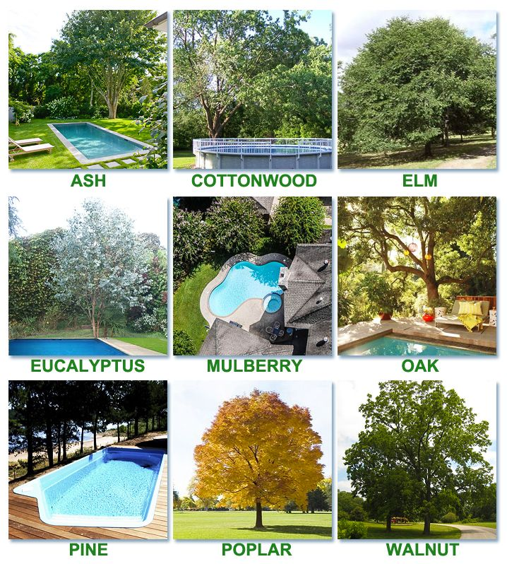 Best Worst Trees To Plant Around A Pool Landscaping Around