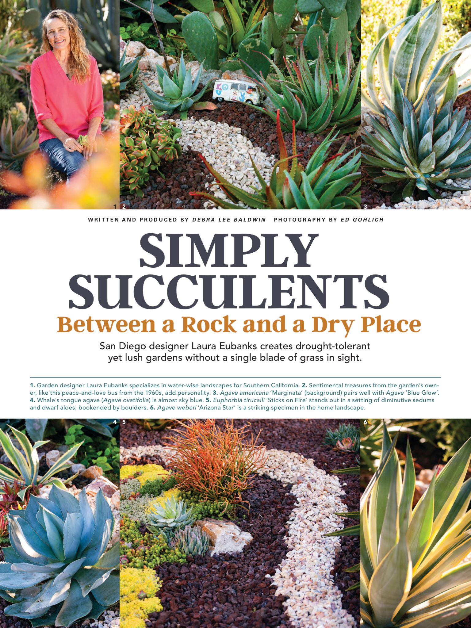 Simply Succulents Between A Rock And A Dry Place From Country Gardens Magazine Spring 2017 Read It On The Texture Succulents Country Gardening Lush Garden