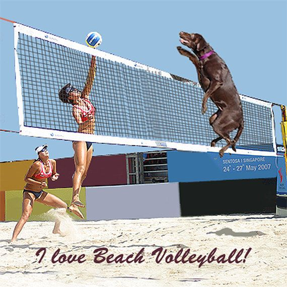 I Love Beach Volleyball Magnet By Imagesetc On Etsy 4 00 Beach Volleyball Volleyball Beach