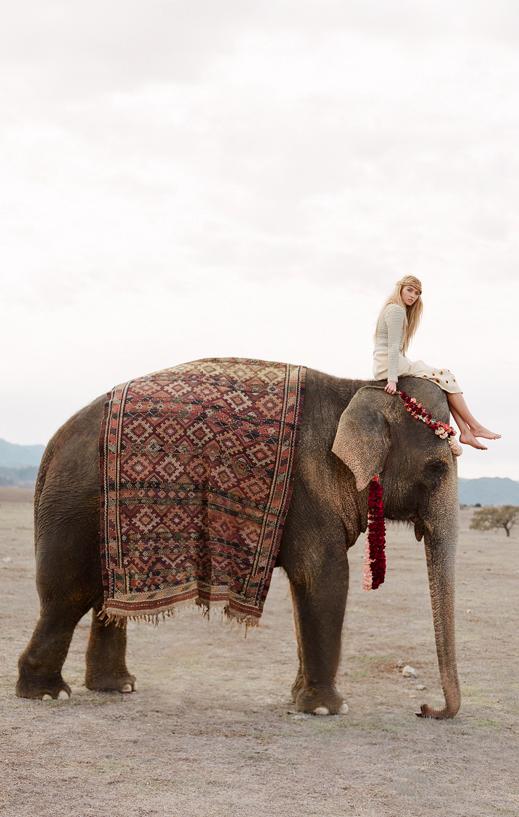 Wild Spirit Elephant Animals Adventure