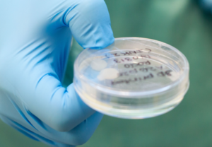 Researchers 3D Print Cartilage with #StemCells Taken from Human Knee — #3DPrinting