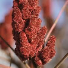 remplacer sumac