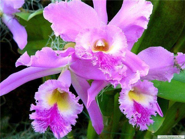 редкие цветы' - Поиск в Google