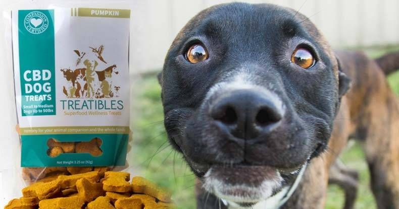 """Dogs are now benefiting from cannabidiol, or CBD, to treat everything from pain and hip dysplasia to cancer and epilepsy — even though the product absurdly remains classified as a Schedule 1 narcotic. """"Most of the pet owners that are using the product are using it for separation anxiety, things...More"""