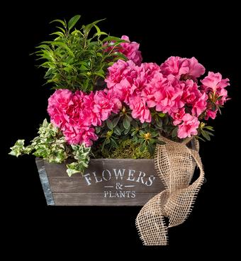 CUENCA Cajón de madera sembrado con planta de temporada. * Color de la flor, según disponibilidad. *Tamaño único 45cm. www.mardeflores.com #enviodefloresMadrid