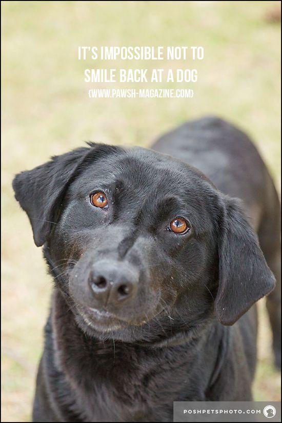 Toronto Dog Photographer Inspiring Dog Quotes Dog Quotes Dog