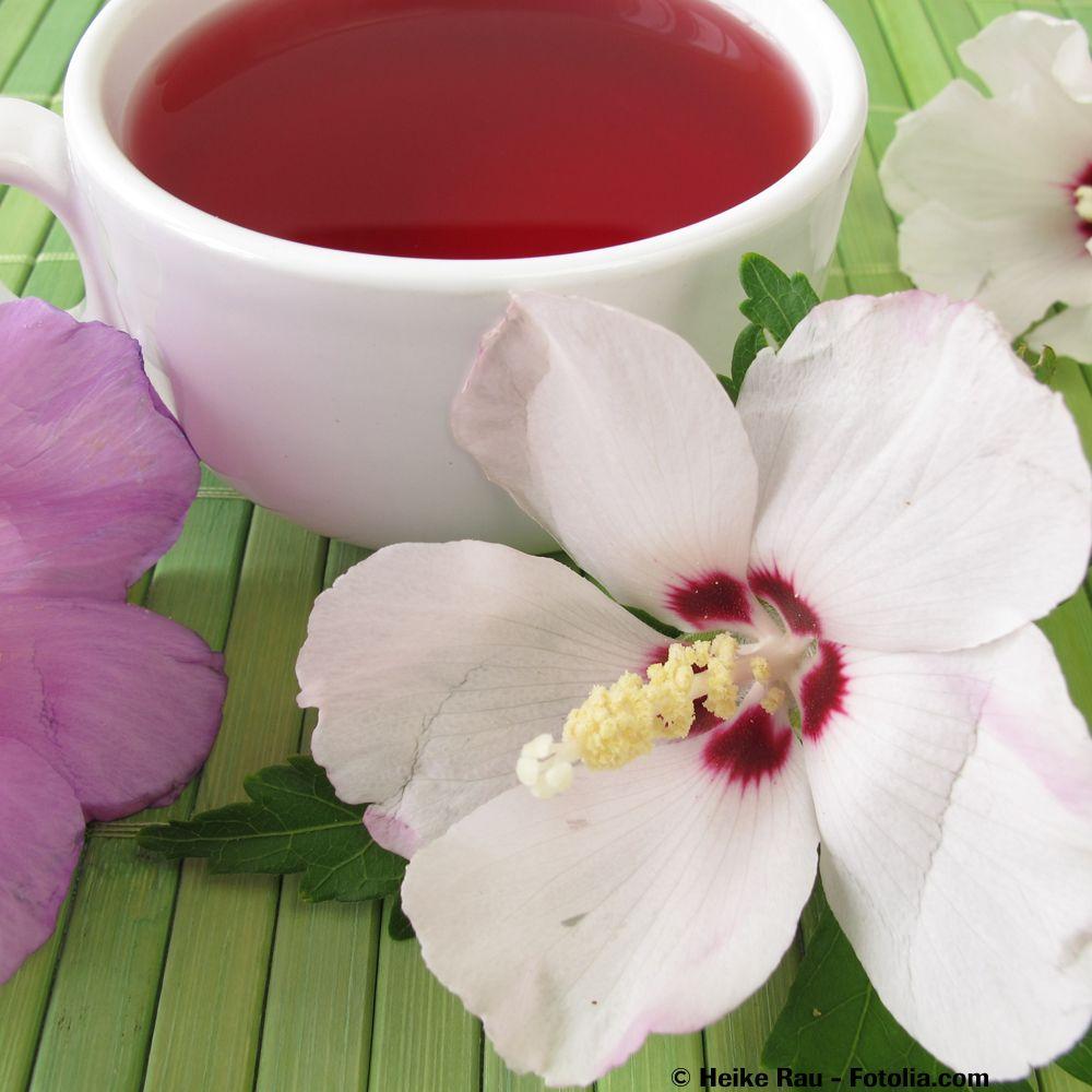 Schaut super aus und schmeckt unglaublich: Hibiskusblütensuppe / looks great and tastes wonderful: hibiscus flower soup