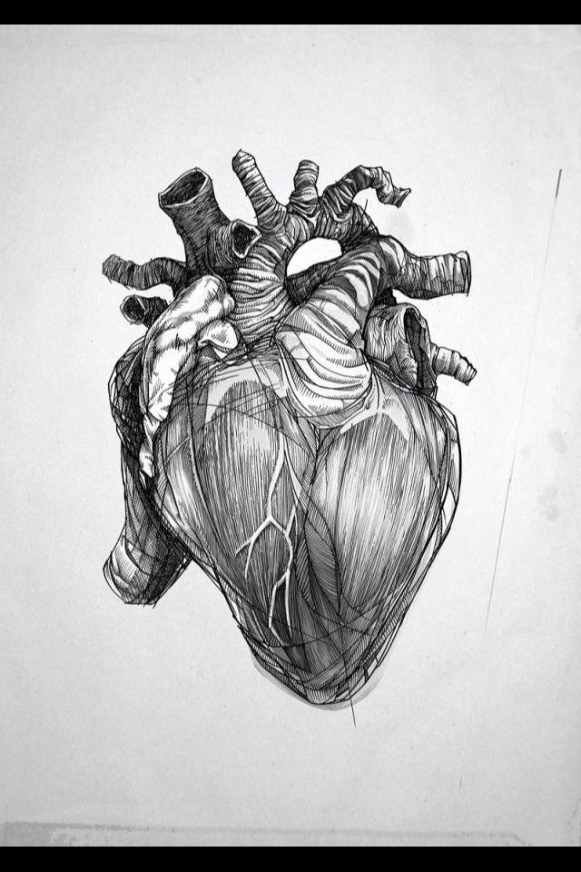 Lujoso Anatomía De La Oyen Viñeta - Imágenes de Anatomía Humana ...