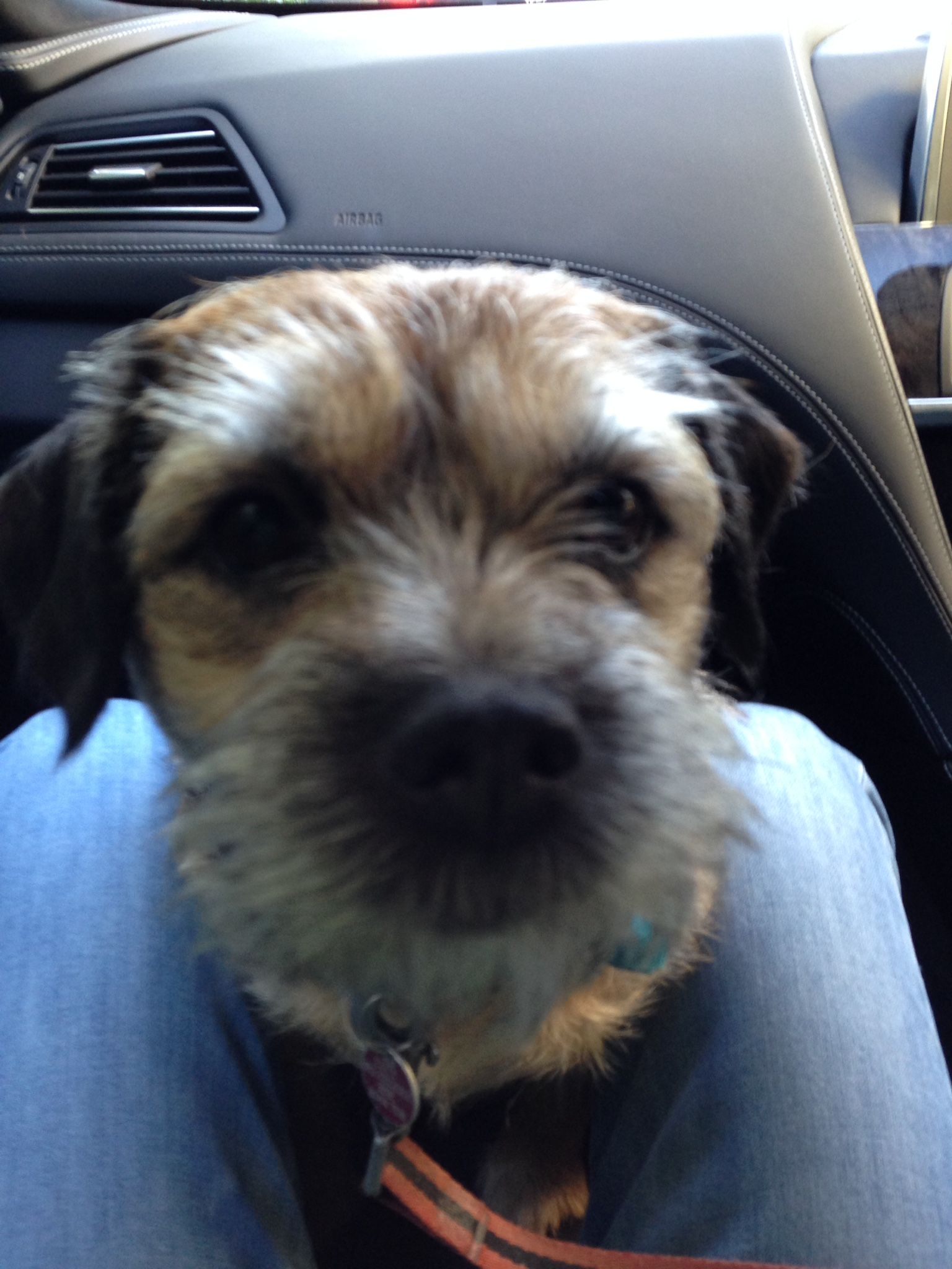 Riding In The Front Of The Car My Favourite Place Brown Dog