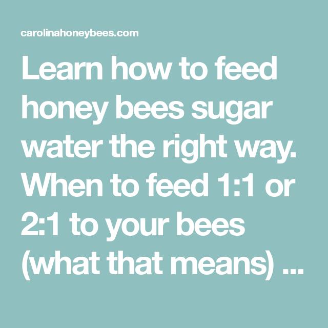 Feeding Bees Sugar Water How Why Carolina Honeybees Feeding Bees Bee Feeding