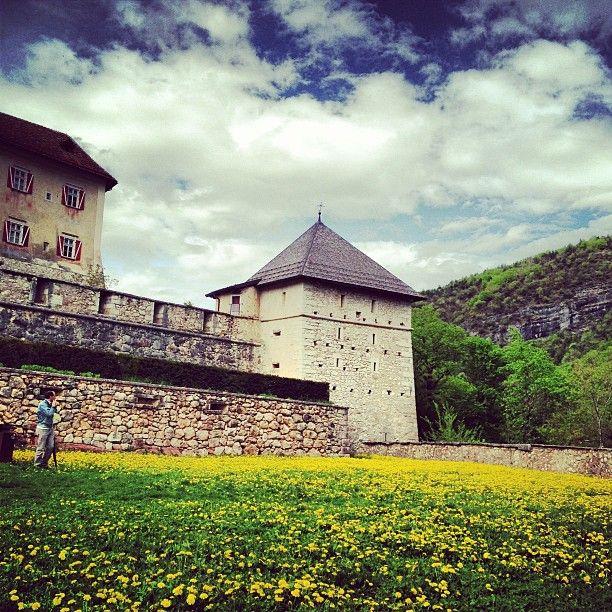Per loccasione hanno messo migliaia di fiori gialli #Castelthun #invasionidigitali