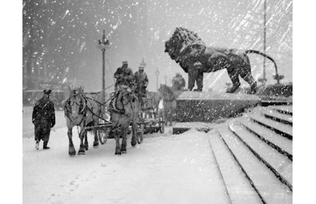 Horses and lions in the snow outside the Art Institute of Chicago in 1925, Photographer: Chicago Daily News