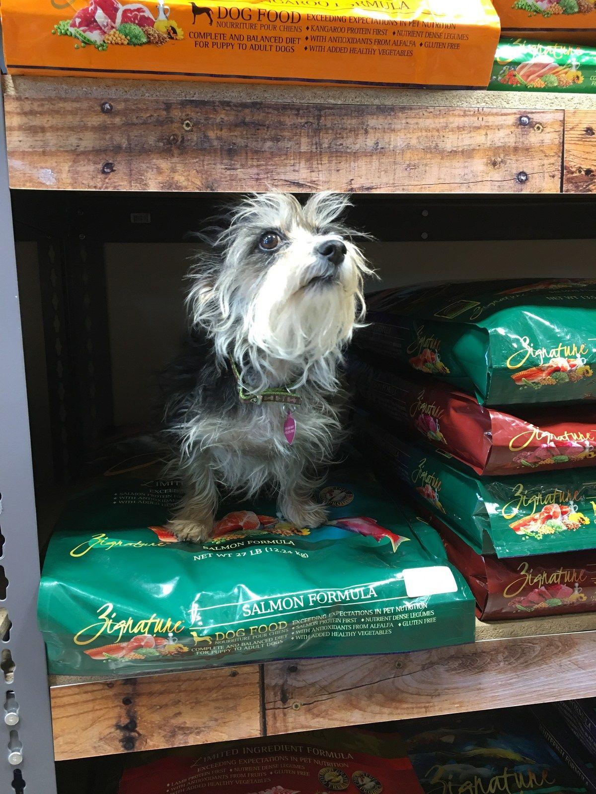 zignature dog food ingredients
