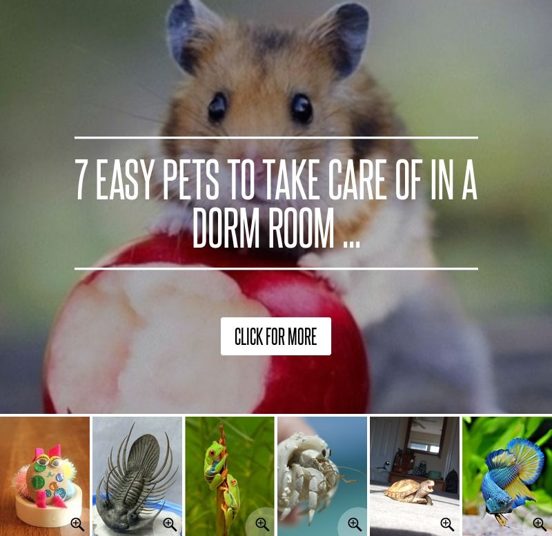 7 Easy Pets To Take Care Of In A Dorm Room Easy Pets Dorm Room Pets