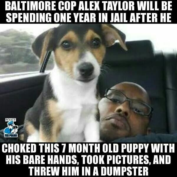 Pin by Audrey Wilson on cop stuff Puppies, Jail, Police