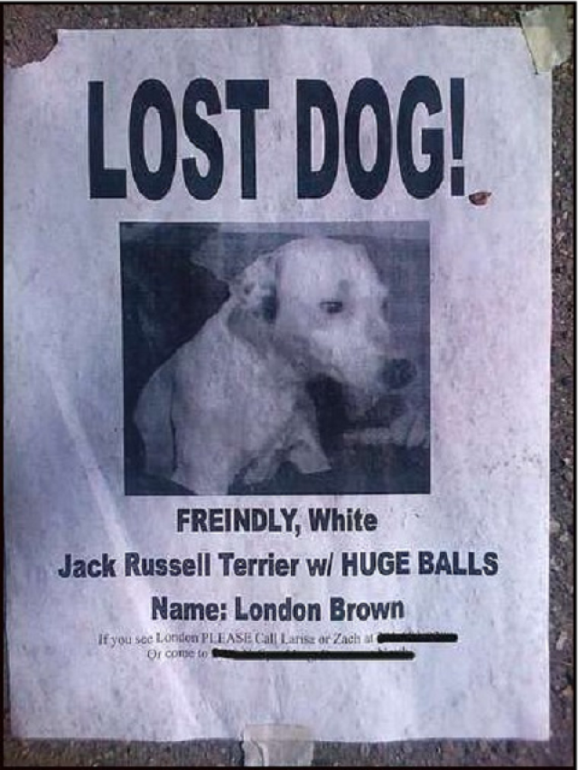 20 Funny Lost and Found Pet Posters Find pets and Funny
