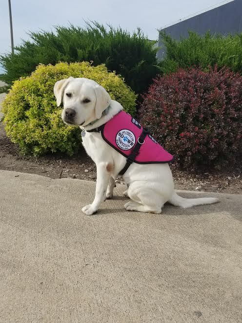 Trained Diabetic Alert Service Dog Will Help Abigail Managed Her