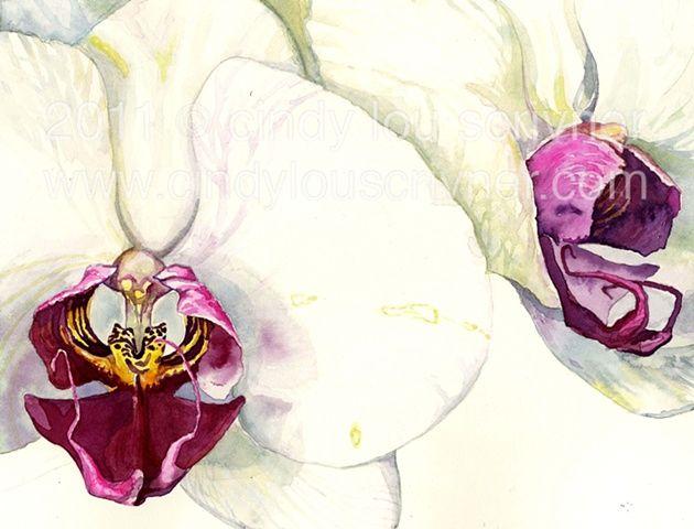 Orchids in Watercolor. www.cindylouscrivner.com
