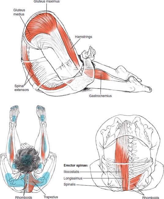 Karnapidasana Ear-to-Knee Pose © Leslie Kaminoff's Yoga Anatomy  B E N E F I T S — Calms the brain — Stimulates the abdominal organs and the thyroid gland — Stretches the shoulders and spine — Helps relieve the symptoms of menopause — Reduces stress and fatigue — Therapeutic for backache, headache, infertility, insomnia, sinusitis