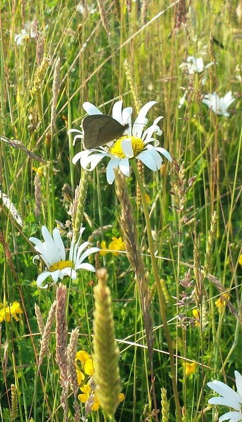 Butterfly butterfly open your wings.