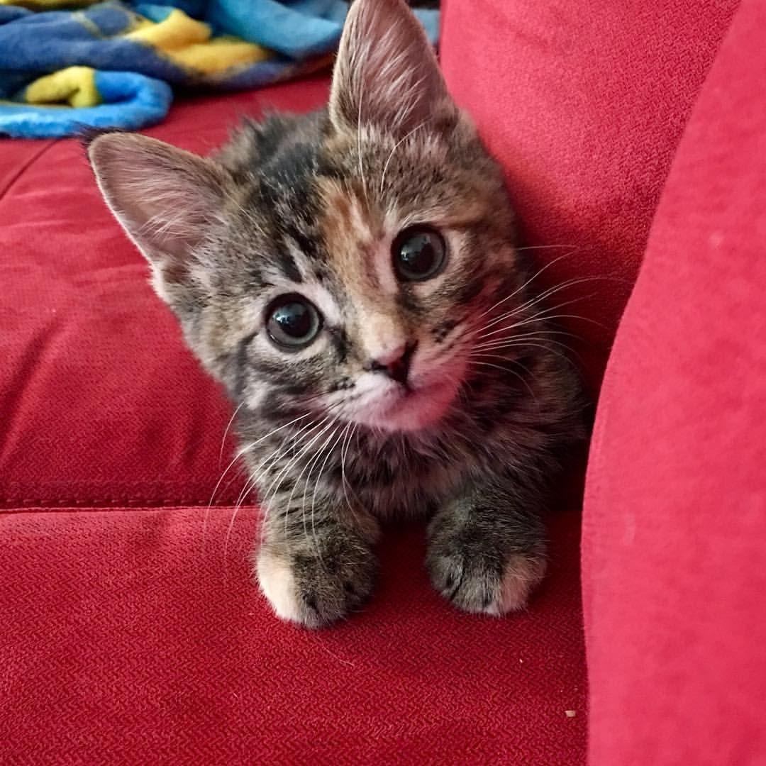 Reddit! Please say hi to Cookie! Cute animals, Cuddly