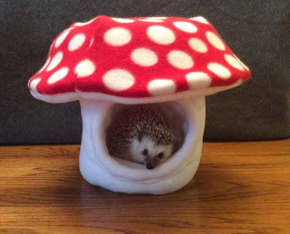 Hey, I found this really awesome Etsy listing at https://www.etsy.com/listing/226774766/mushroom-dome-hide-for-small-animals