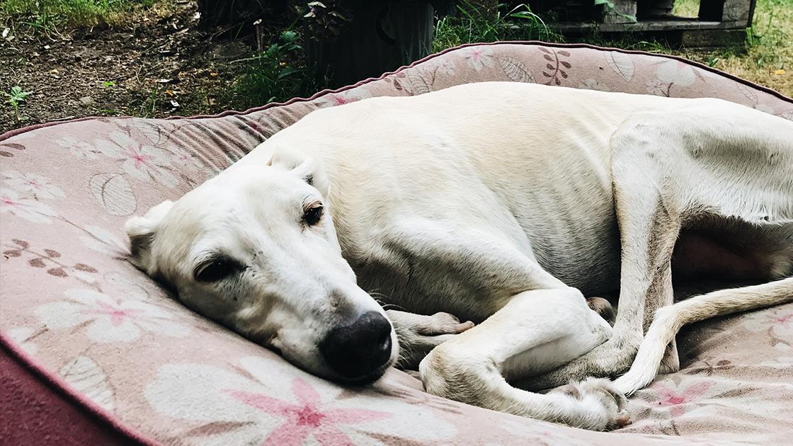 3 Tipps, die dir & deinem Hund eine sichere Bindung