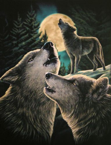 Wolf Song Card by Lisa Parker