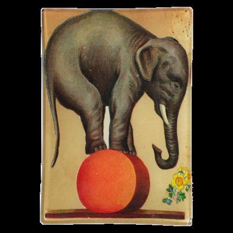 John Derian Company Inc Circus Elephant In 2021 Circus Elephant John Derian Decoupage Elephant Art