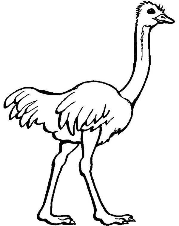 Ostrich Coloring Pages For Kids Preschool And Kindergarten Zoo