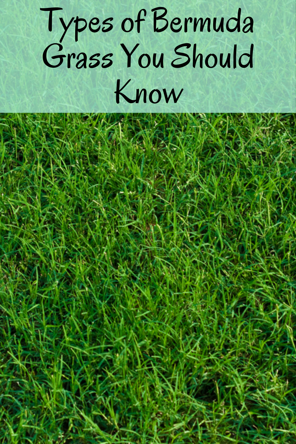 How To Plant Grass Seed On Existing Lawn Planting Grass Overseeding Lawn Lawn Treatment