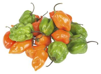 50++ When is a jalapeno ready to pick information