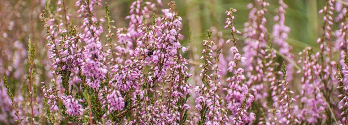 Progettare il terrazzo autunnale con fiori e piante colorati In ...
