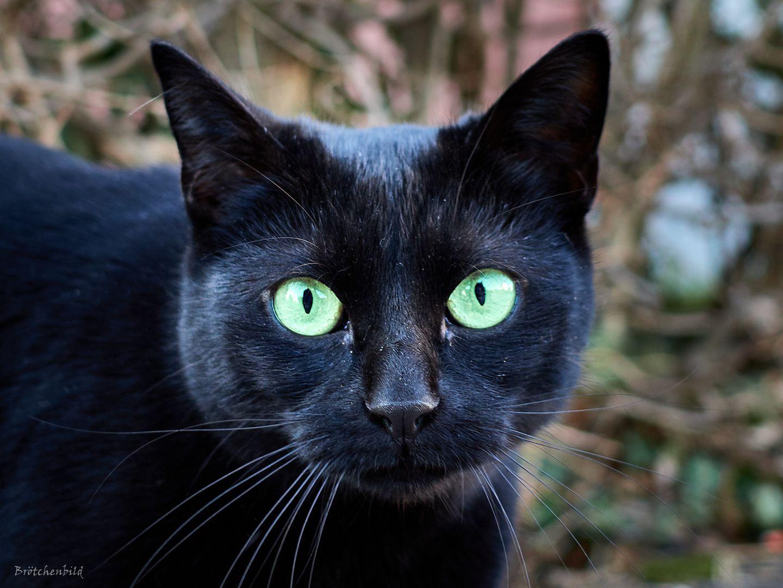 Schwarze Katze Schwarze Katze Katzen Weisse Katzen