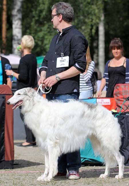 barzoi.be·17-8-2014:Valkeakoski/FIN - CAC Keurmeester : Mw. Zake Ligita/LV