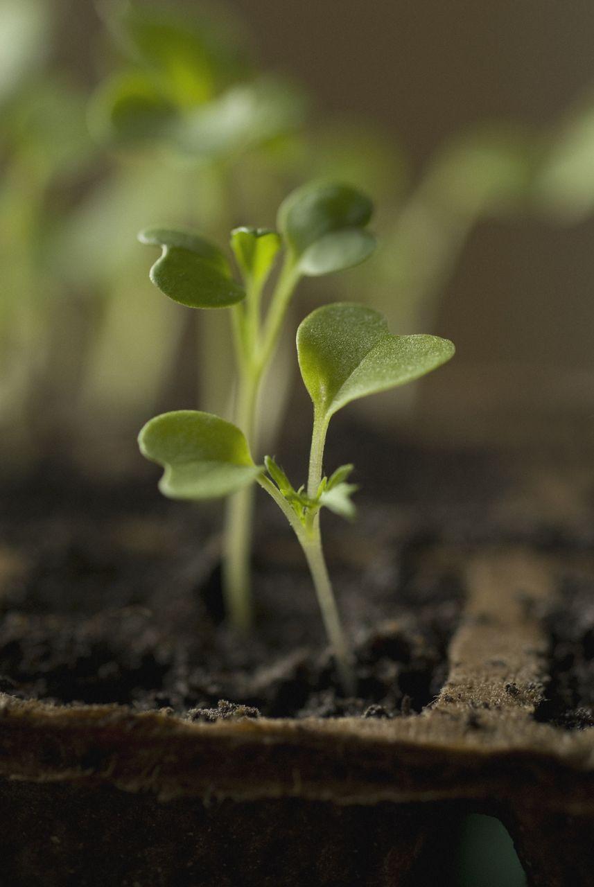 Salat selbst anbauen • Pflanzen Tipps & Tricks • 99Roots.com