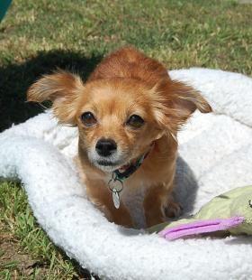 Best Friends In Atlanta Dog Adoption Pet Adoption Cat Adoption