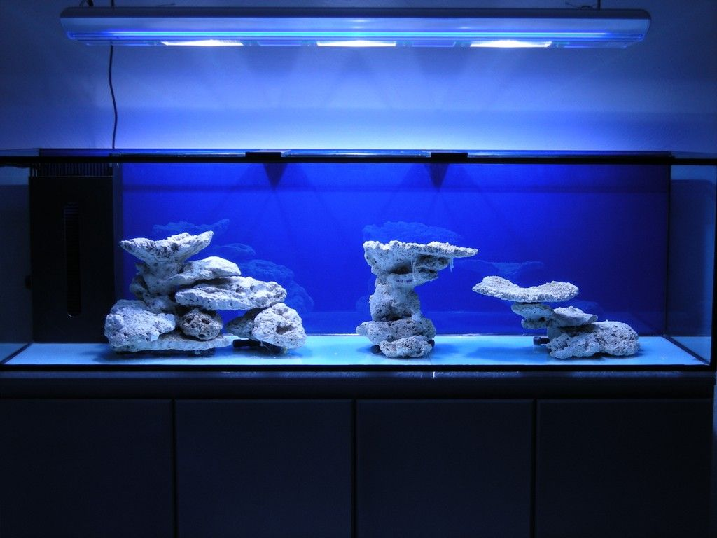 Minimalist Aquascaping - Page 31 - Reef Central Online ...