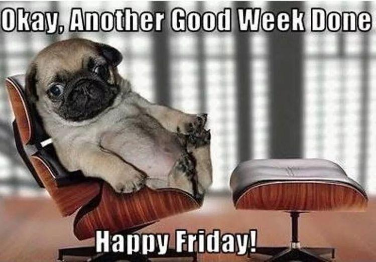 Friday Memes 2019 Hilarious Memes Friday Meme Friday Funny Funny Friday Memes Dog Memes Dog Pictures Picture Friday Humor Friday Meme Funny Friday Memes