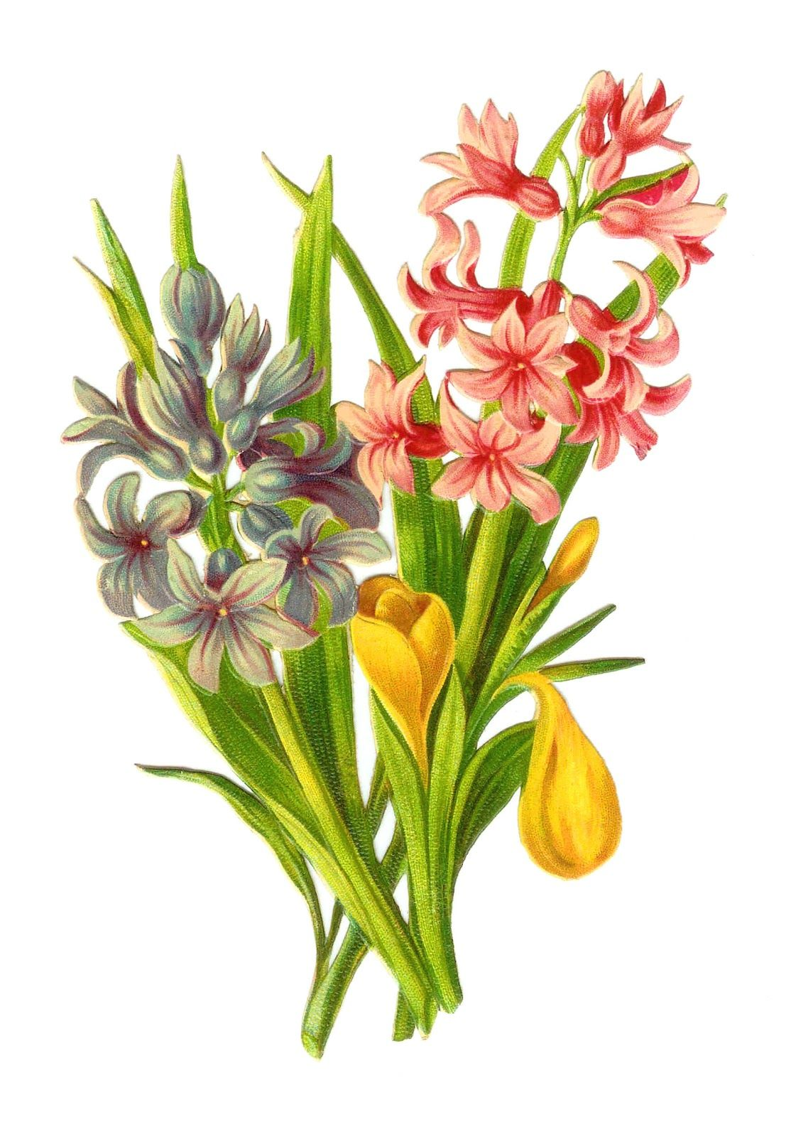 http 2 bp blogspot com c igi ylxiq t zhuxmcf9i aaaaaaaacas rh pinterest com vintage flowers clip art images vintage flower clipart png