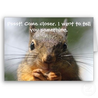 Funny Squirrel Birthday Card Zazzle Com Squirrel Funny Cute Squirrel Squirrel