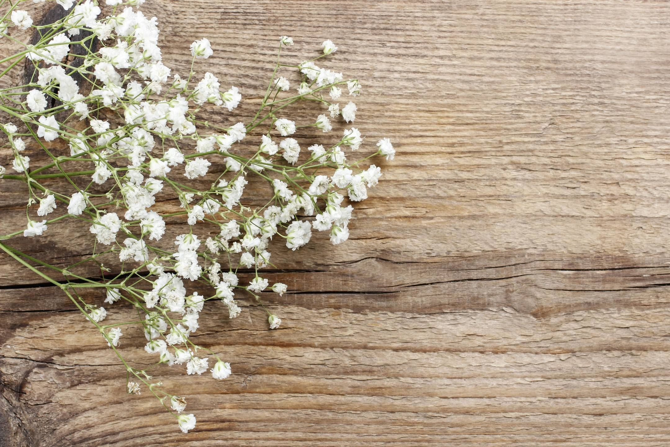 Rustic Decoration Delicate Baby S Breath Flowers On A Wood Background In 2020 Babys Breath Flowers Babys Breath Flower Wallpaper