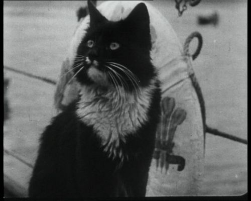 Newsreels Video Archive Film Footage Stills British Pathe Cat And Dog Photos Cats Military Dogs