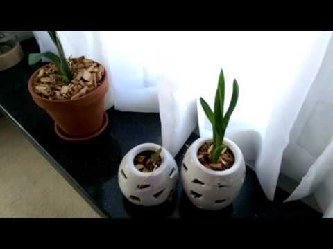 Tour Pela Casa - COZINHA - YouTube